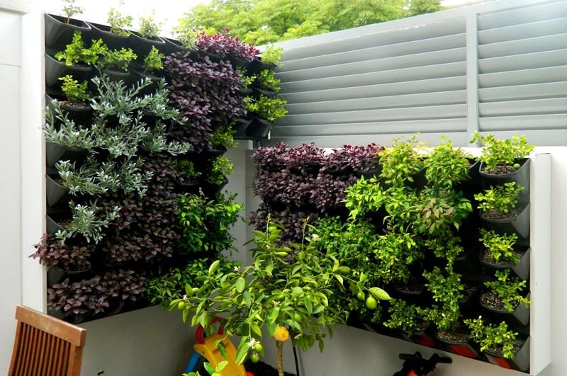 Вертикальный сад из суккулентов на заборе