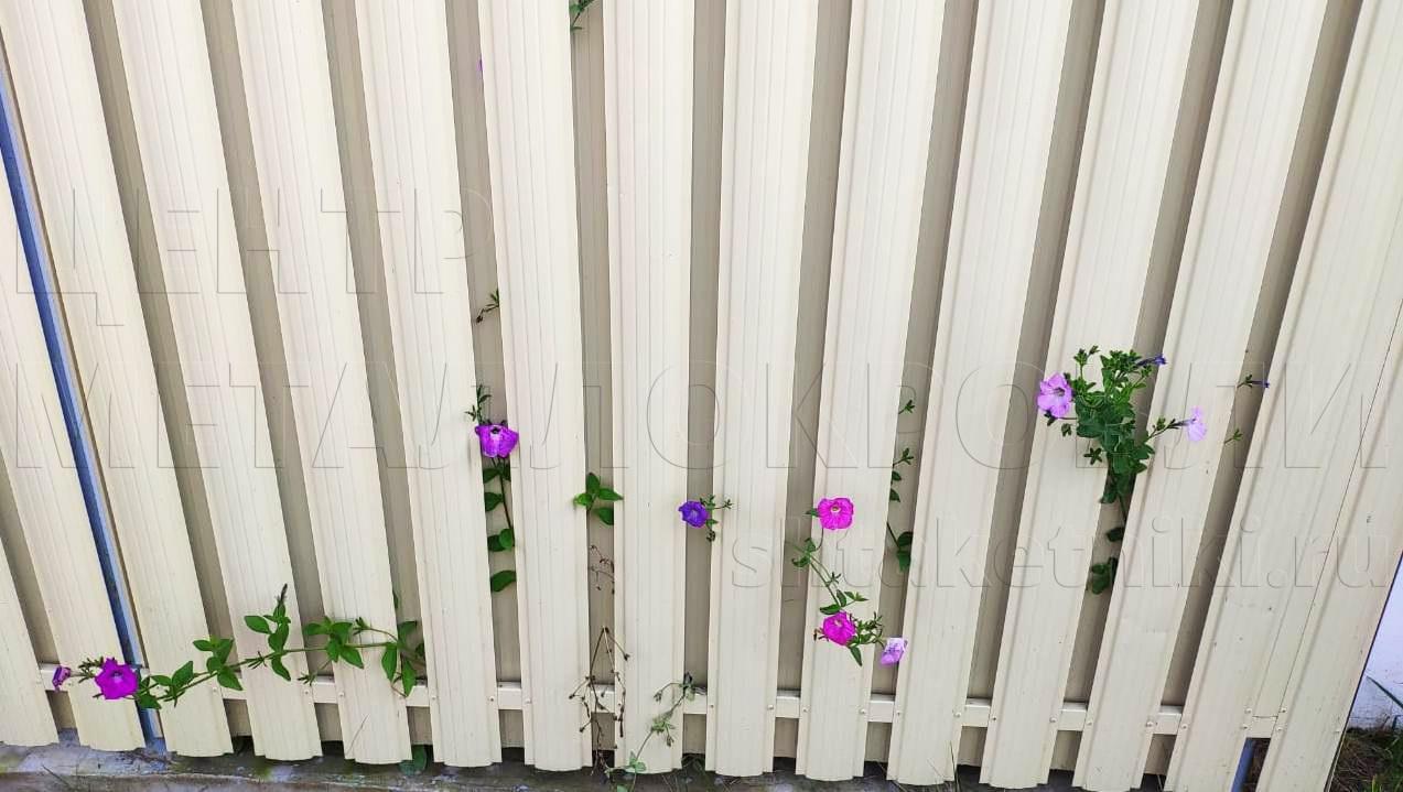 Штакетник как опора для вьющихся растений